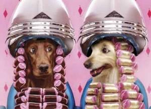 Peluquería-canina-como-idea-de-negocios-texto2